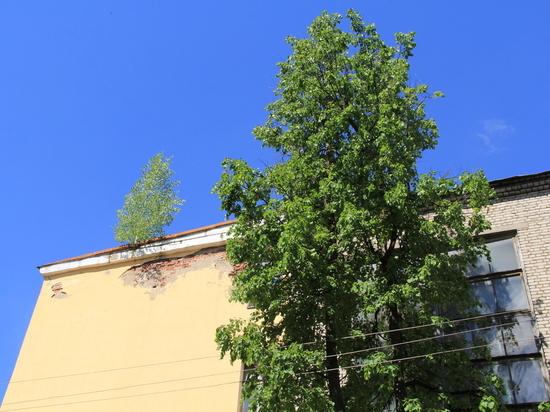 Здесь будет город де Сад: как псковские общественники деревья спасали